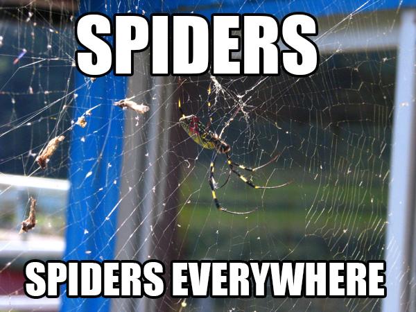 spiders_jorogumo_meme